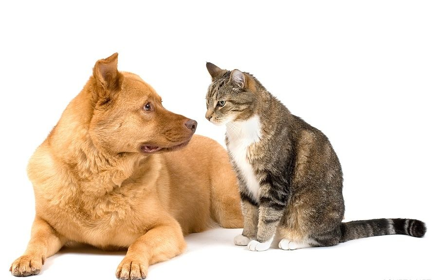 1310755542_179bigstock_dog_and_cat_on_white_backgroun_2056673
