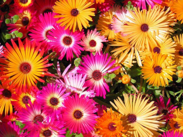 45015770_723913_flowers_wp