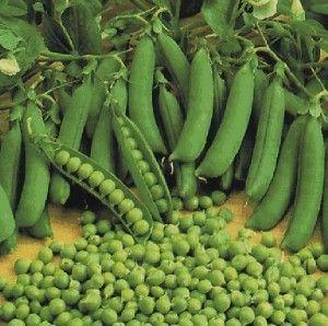 Горох овощной
